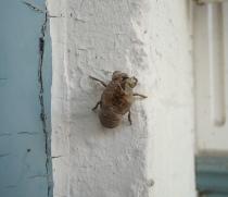 Empty bug