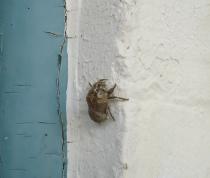 Empty Bug2
