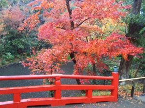 Autumn colours in December