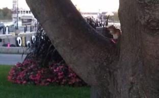It's a chipmunk.