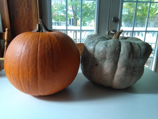 It weighs about twice as much as the orange pumpkin