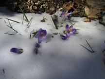 Flowers peeking through the snow.